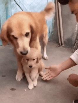 Руки убери!