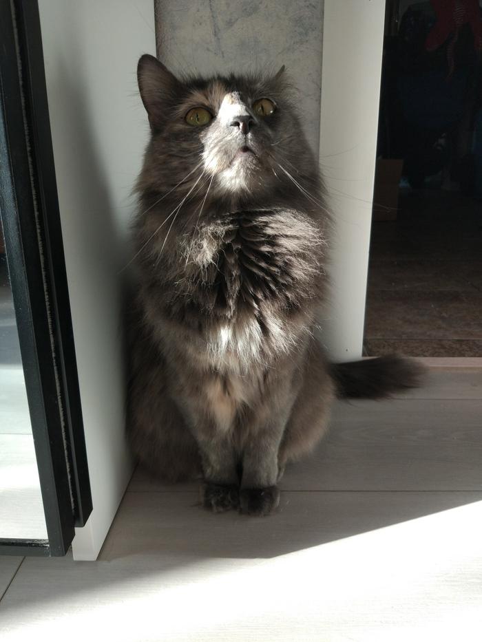 Мои приемыши Кот, Котомафия, День кошек, Длиннопост