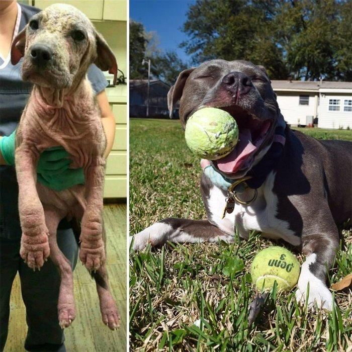 Собаки из приюта: снимки до и после обретения семьи Собака, спасение, длиннопост, жесть, помощь животным