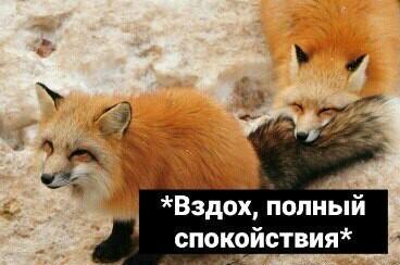 https://cs10.pikabu.ru/post_img/2018/03/02/3/15199612331303689.jpg