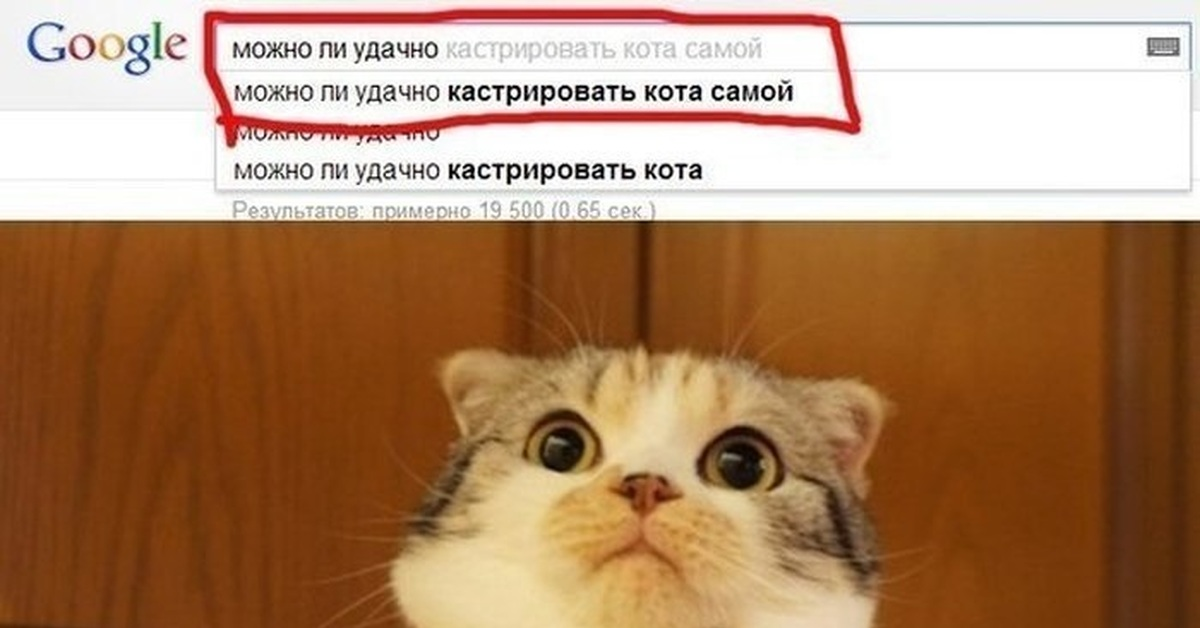 как кастрировать кота дома