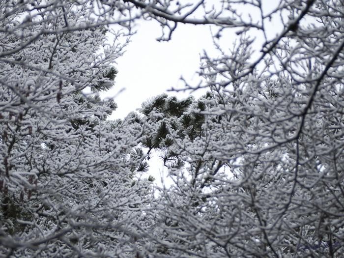 Зимняя сказка... Снег, Лес, Иней, Длиннопост