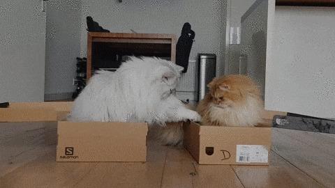 Однако какая у тебя замечательная коробка! Кот, Животные, Домашние животные, Милота, Коробка, Smoothiethecat, Гифка