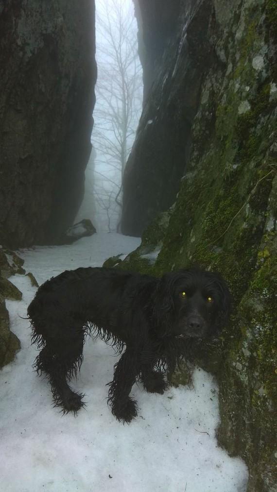 Герда Собака, Русский спаниель
