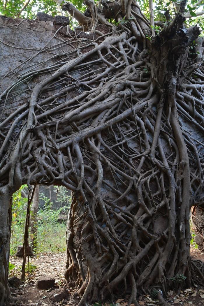 Заросший джунглями форт на севере Гоа Путешествия, Фотография, Индия, Гоа, Заброшенное, Форт, Длиннопост