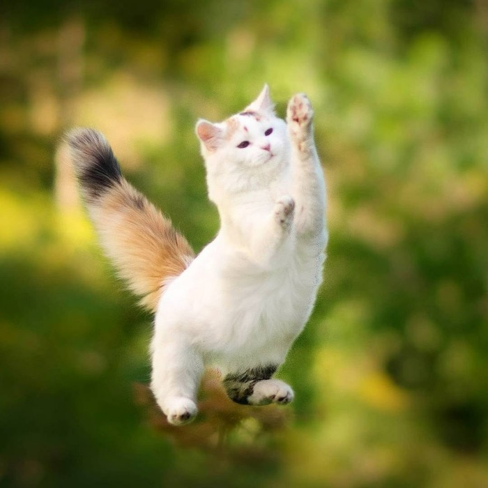 Летающий котик Кот, Прыжок, Природа, Длиннопост