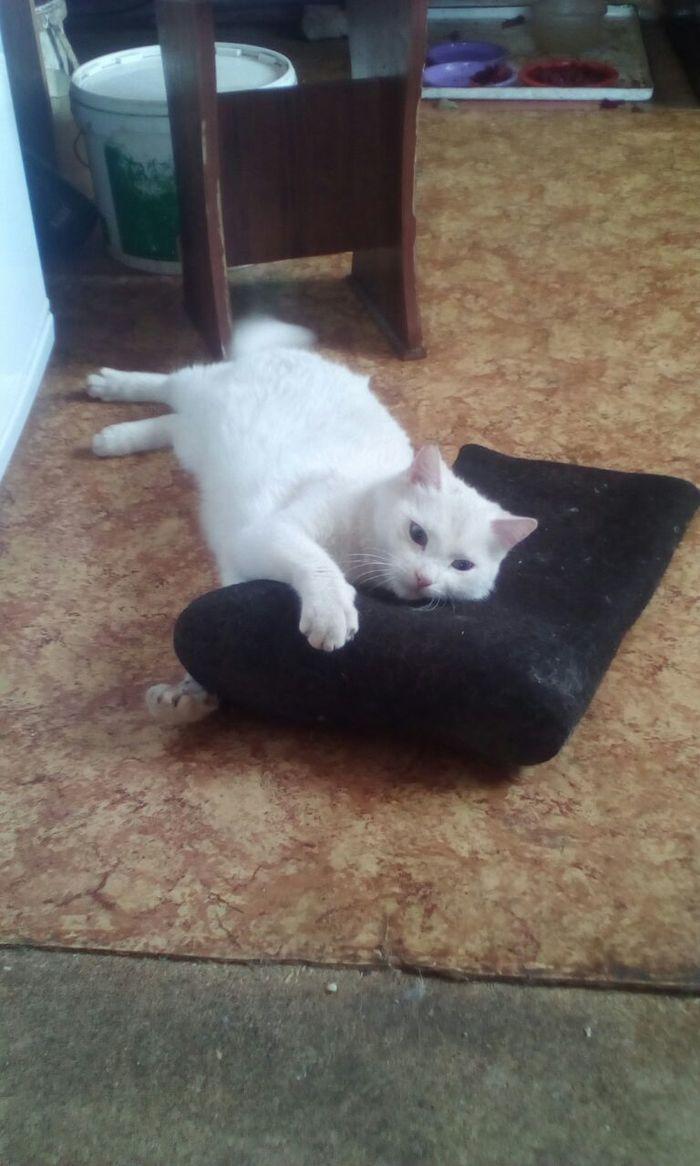 Это моё! Кот, Валенки, Не дам, Любовь, Длиннопост