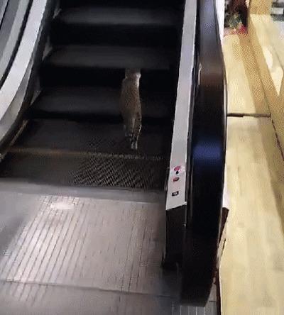 Моя карьерная лестница