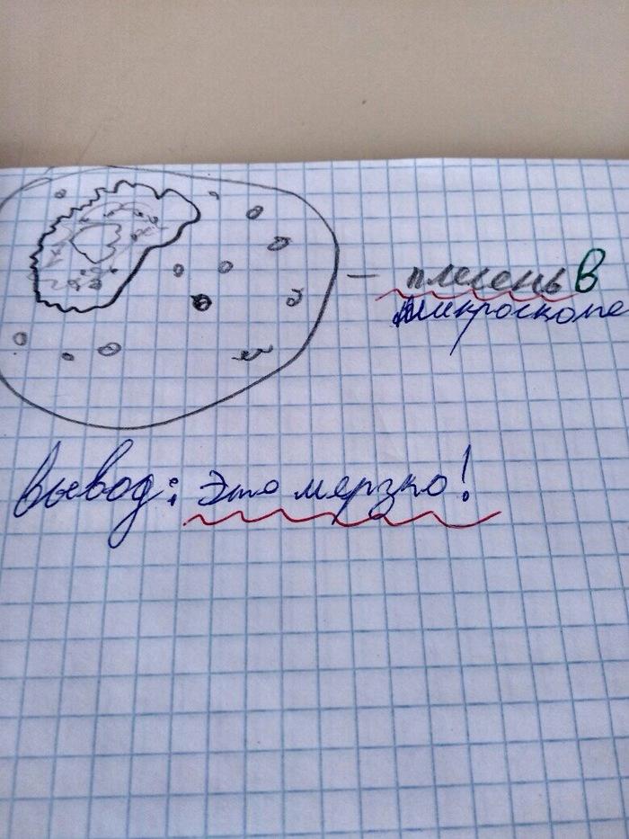 Лабораторная работа по биологии за 5 класс
