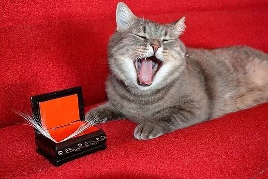 150 усиков кота - это тебе не марки собирать Рекорд, Кот, Хобби, Усы