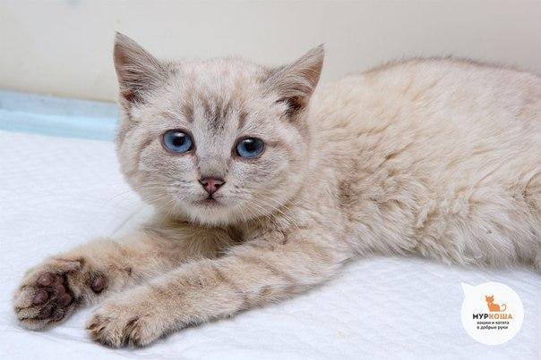 Идентификация котейки Кот, Опознание, Найденыш