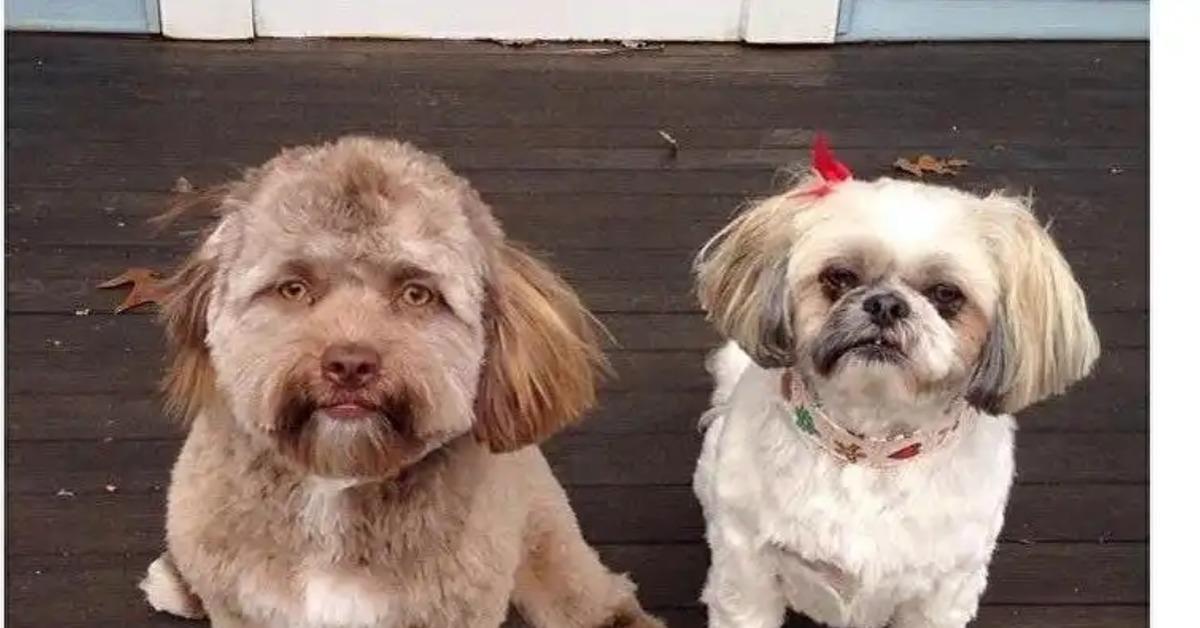 dog that looks human - 1000×523