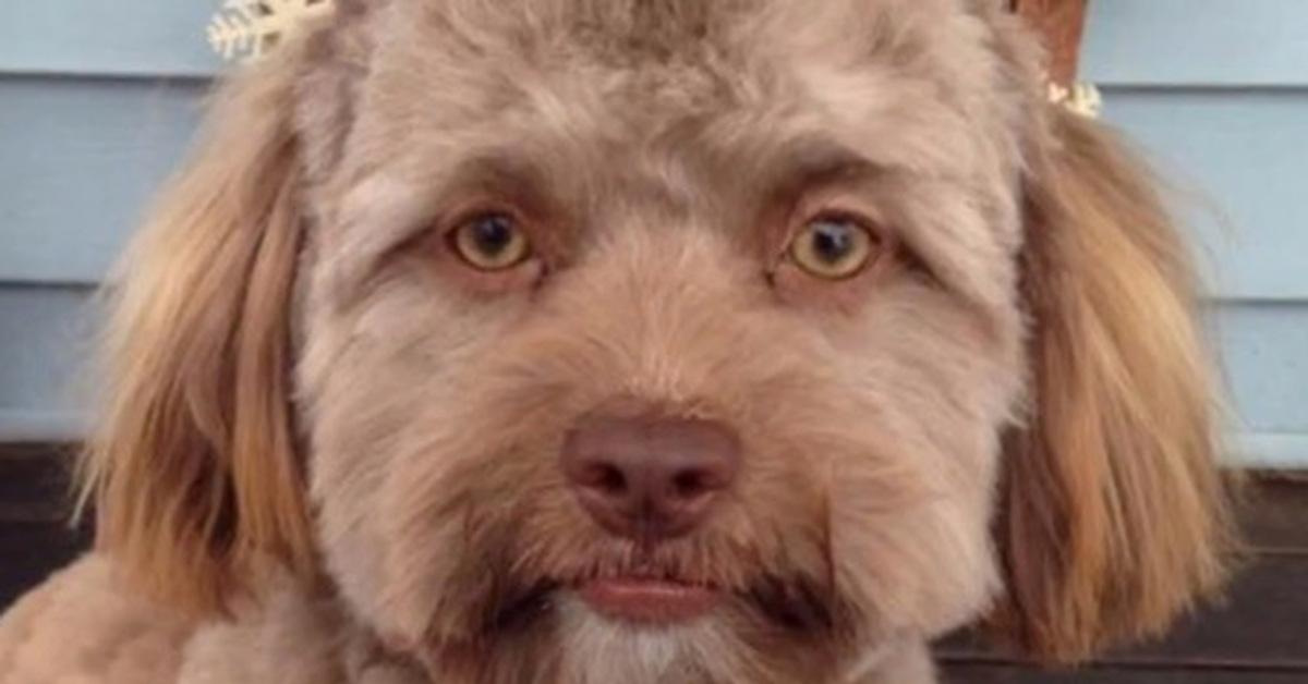 dog that looks human - 1420×740