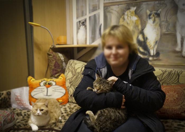 ВЕЛИКИЙ ТИГРА - бывший Усатый-Полосатый. (Раненый кот - 6) Кот, Добрые руки нашлись, Ура, Минск, Длиннопост