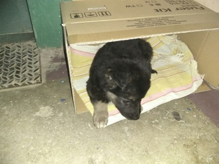 Подбросили щенка в г. Пермь Подбросили, Помощь животным, Самый верный друг, Длиннопост, В добрые руки, Помощь, Собака, Без рейтинга