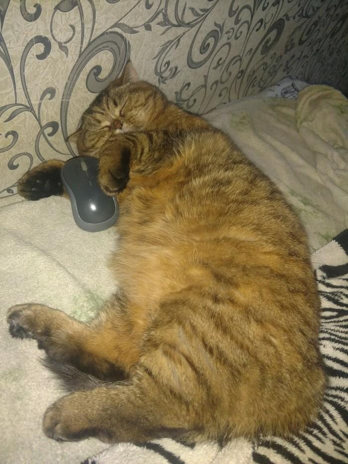 Хорошо спать с мышкой