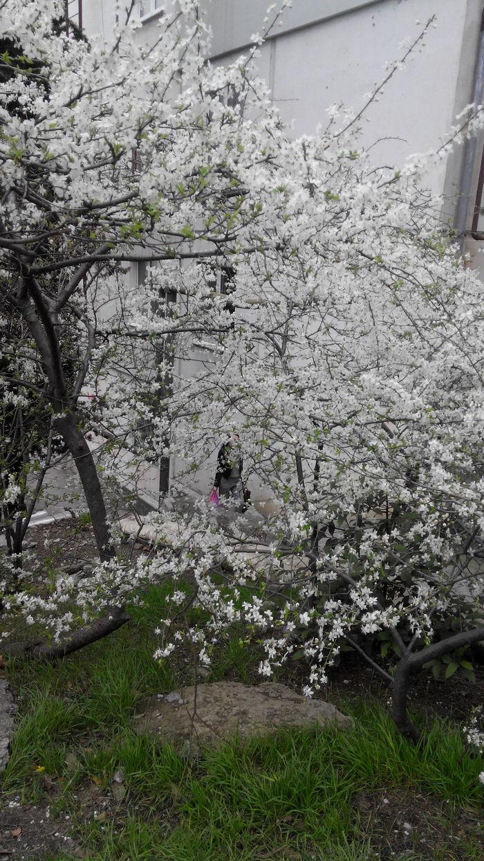 Ялта 18.03.2018. Ялта, Весна, Прогулка, Длиннопост
