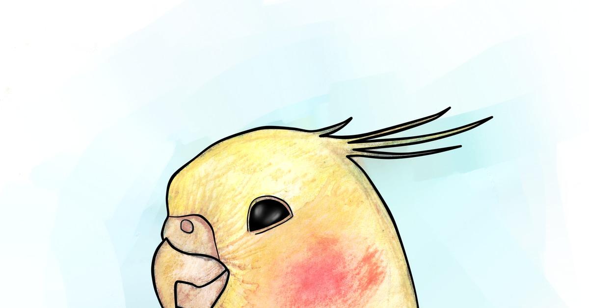Картинки срисовки кореллы