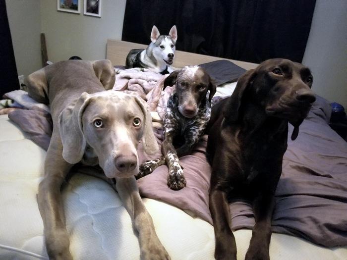 Твоя кровать теперь наша!