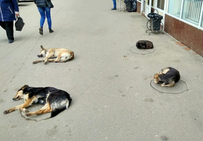 Госпрограмма: Доступный люк - каждой собаке!