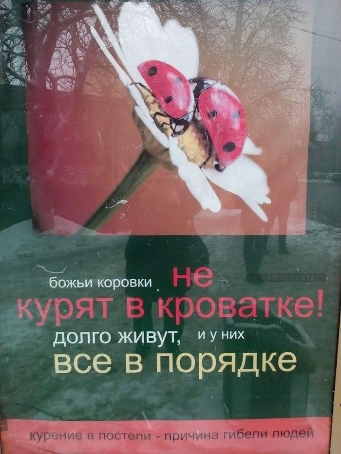 Божьи коровки. Вижу рифму, Рифмоплеты, Божья коровка, Курение, Убивает, Фотография, Социальная реклама