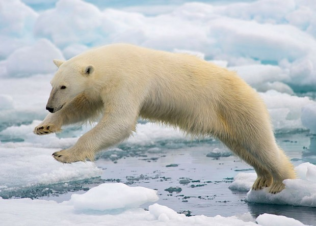 Найден 24 пенис медведя