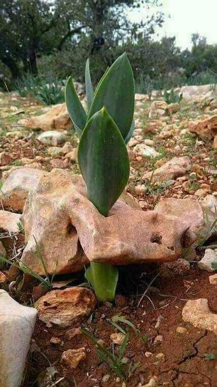 Когда камень не помеха. Фотография, Растения, Камень, Выживание, Тяга к жизни