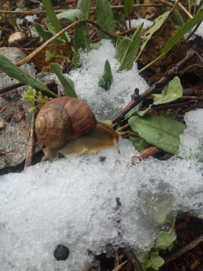 Весна в Крыму Весна, Улитка, Снег