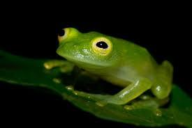 Топ-10 самых необычных животных в мире Красная книга, редкие животные, интересные организмы, наука, факты, природа, длиннопост, фотография