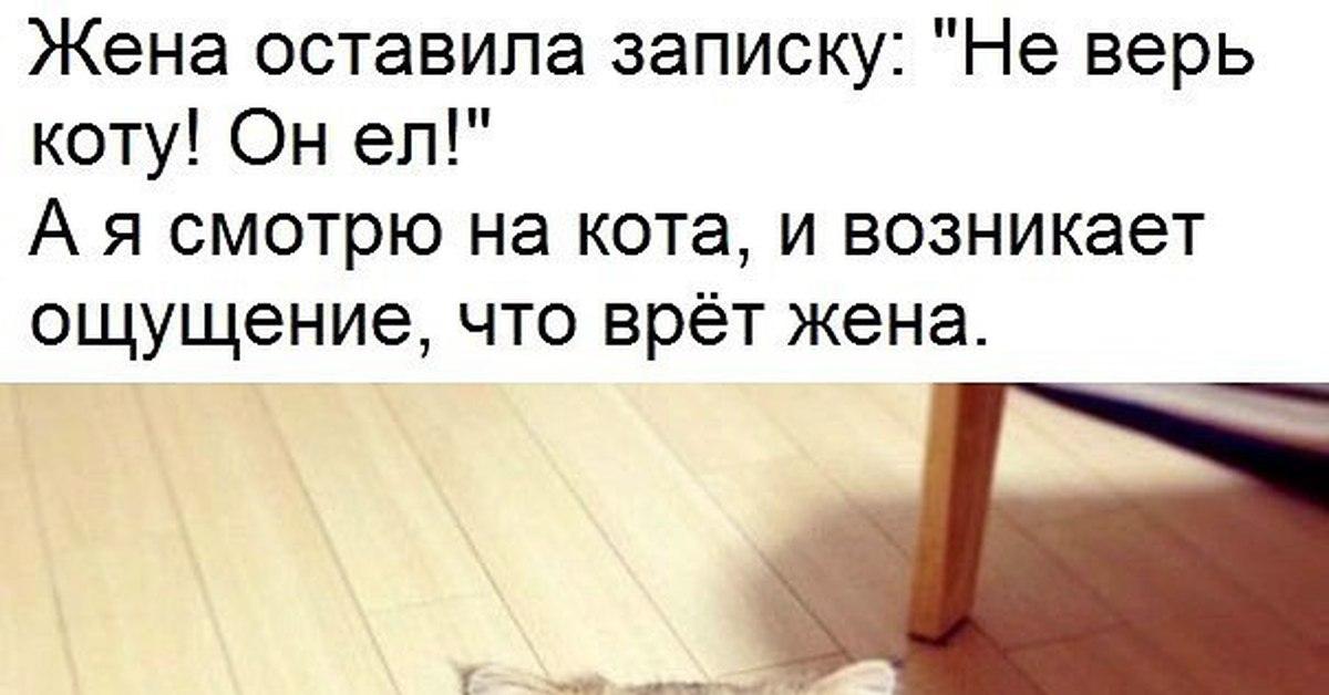 этом картинка не верь коту его кормили крышкой для запекания