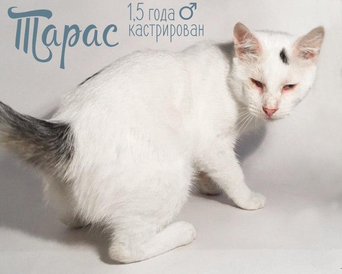 Коты ищут дом, или как мы приютили 21-го кота (Санкт-Петербург)! Кот, Помощь животным, В добрые руки, Приют, Добро, Санкт-Петербург, Длиннопост, Без рейтинга