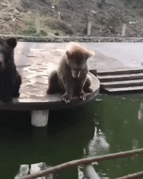 Дай мне тоже! Дай мне тоже!