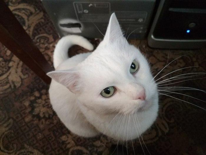 Кыся... Кот, Любимый, Засранец, Приятель, Длиннопост