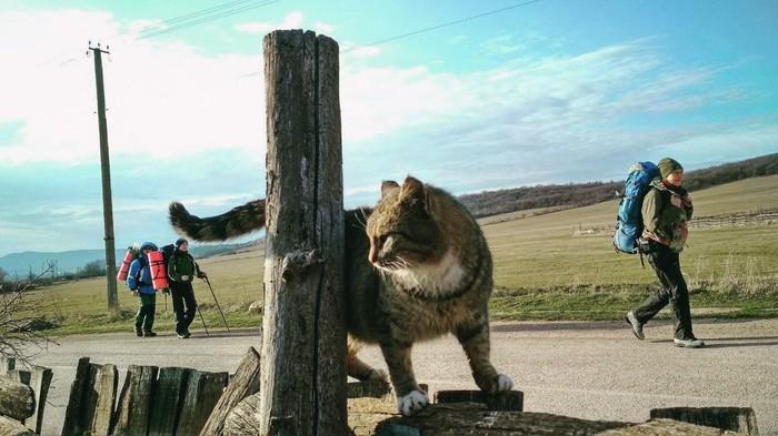 Местный оберег. Кот, Крым, Флора и фауна