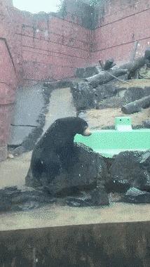 Медведик ловит снежинки лапками.