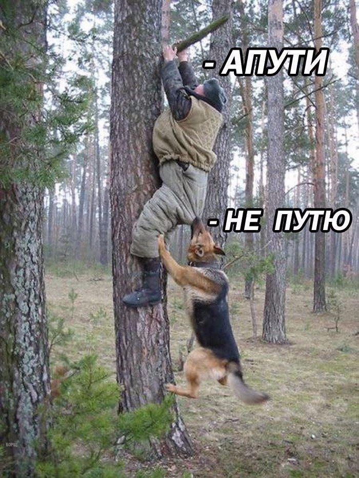 Кусь) Милота, Собака, Картинки