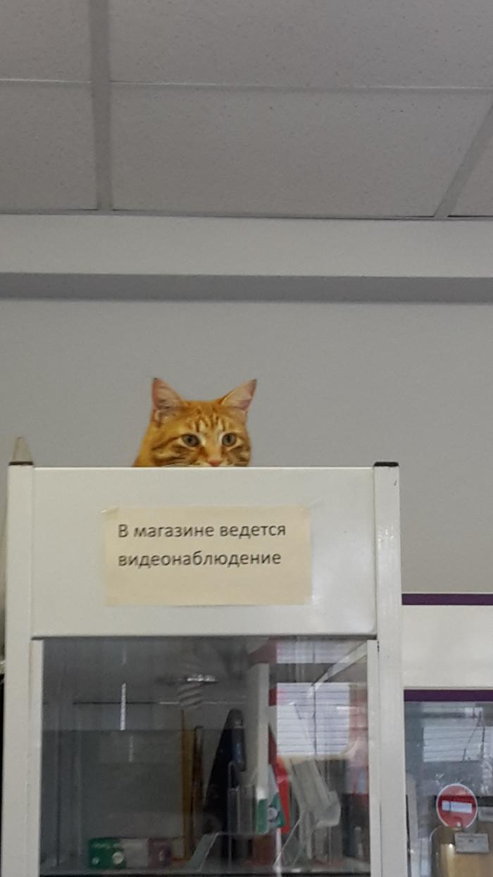 Наблюдатель
