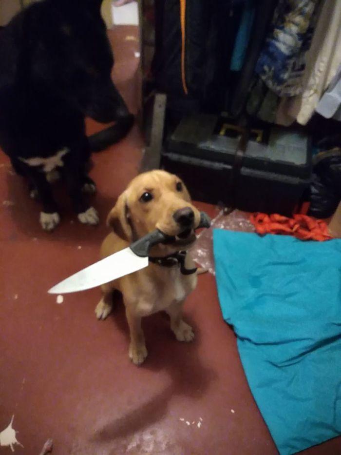 Хозяин, барана резать будем? Собака, Оружие, Из жизни, Моё, Теги явно не мое