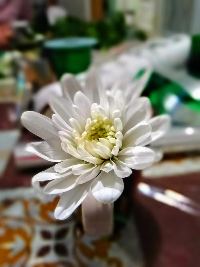 Хризантема веточная Хризантемы, Фотография, 8 марта, Цветы, Весна