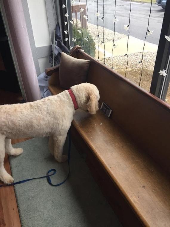 Друг владеет салоном. Клиент спросил, может ли он привести свою собаку, так как она хорошо себя ведет.