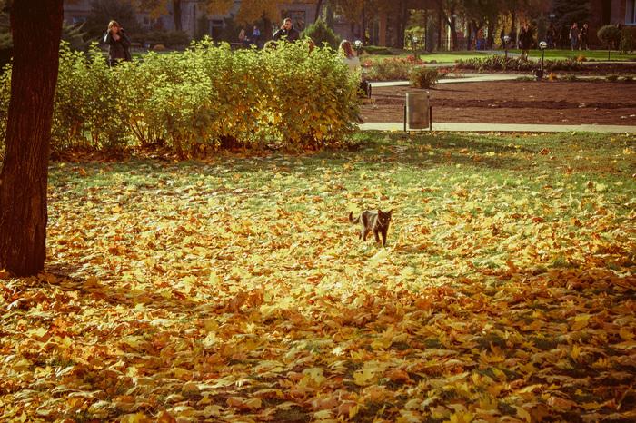 Осенний котофей Canon 600D, Осень, Луганск, Кот