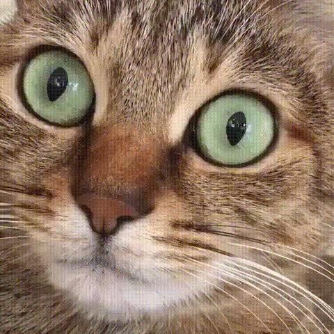 Гр#банная контекстная реклама! Реклама, Нежданчик, Приплыло, Гифка, Кот