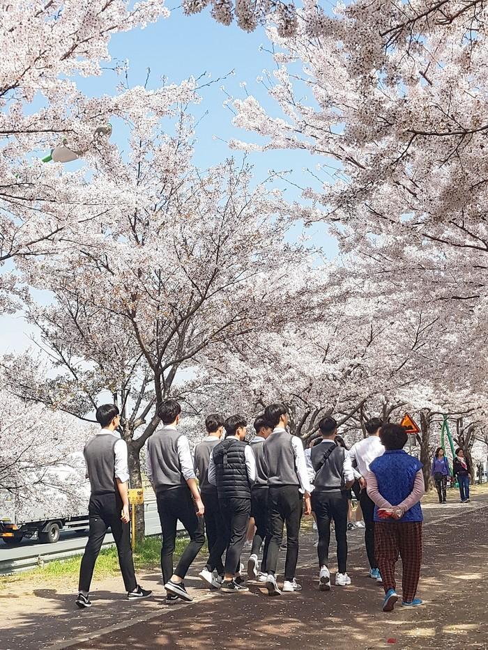 Корея. Весенний пост. Корея, Азия, Азиаты, Русские зарубежом, Длиннопост, Фотография