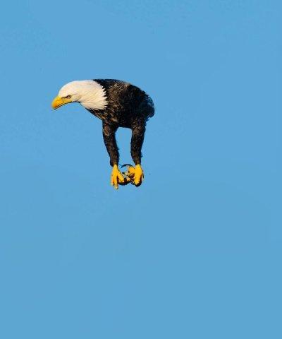 Пике чувства юмора Twitter, Птицы, Чувство юмора, Длиннопост