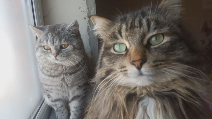 Обидно даже... Кот, Любовь к животным, Фотография