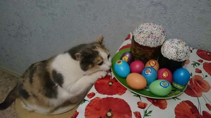 Практическая химия Яйца, Краски, Пасхальные яйца, Кот, Вуська и Соня, Рукожоп