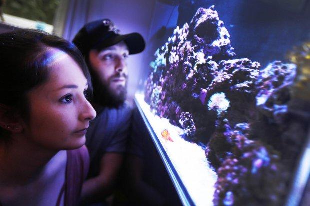 Неосторожный аквариумист из Британии, решивший почистить свой морской аквариум, чуть не убил всю свою семью.