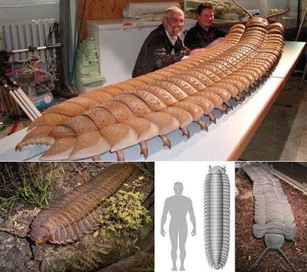 Артроплевра (Arthropleura), вымершая сороконожка, которая жила 300 млн. лет назад. Сороконожка, Беспозвоночные, Arthropleura, История