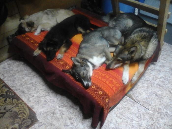 Спят усталые собачки, кошки спят. Собака, Кот, Спят, Длиннопост
