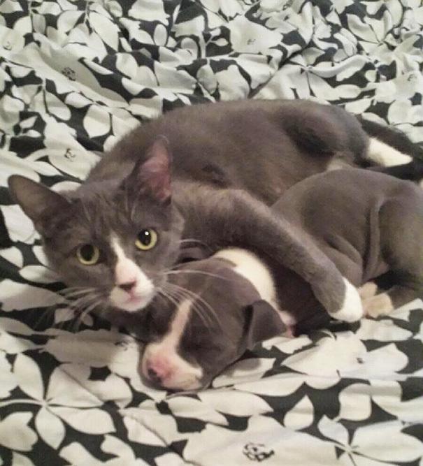 Ты мне брат? Такие родные, но от разных родителей Животные, близнецы, Картинки, длиннопост, кот, Собака